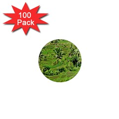 Greenery Paddy Fields Rice Crops 1  Mini Magnets (100 Pack)  by Nexatart