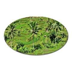 Greenery Paddy Fields Rice Crops Oval Magnet