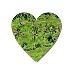 Greenery Paddy Fields Rice Crops Heart Magnet by Nexatart