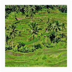 Greenery Paddy Fields Rice Crops Medium Glasses Cloth
