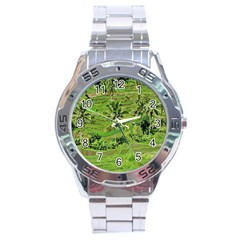 Greenery Paddy Fields Rice Crops Stainless Steel Analogue Watch by Nexatart