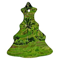 Greenery Paddy Fields Rice Crops Christmas Tree Ornament (two Sides) by Nexatart