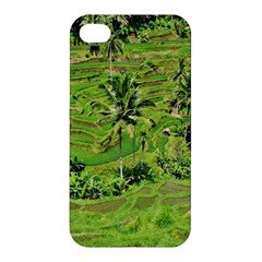 Greenery Paddy Fields Rice Crops Apple Iphone 4/4s Hardshell Case by Nexatart