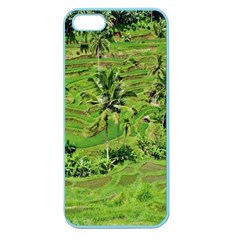 Greenery Paddy Fields Rice Crops Apple Seamless Iphone 5 Case (color) by Nexatart