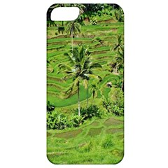 Greenery Paddy Fields Rice Crops Apple Iphone 5 Classic Hardshell Case by Nexatart