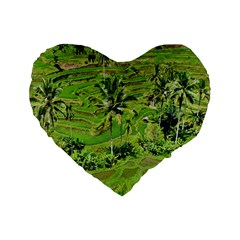 Greenery Paddy Fields Rice Crops Standard 16  Premium Heart Shape Cushions by Nexatart