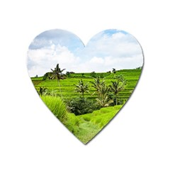 Bali Rice Terraces Landscape Rice Heart Magnet by Nexatart