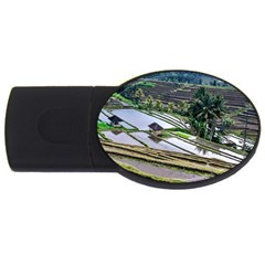 Rice Terrace Rice Fields Usb Flash Drive Oval (4 Gb) by Nexatart