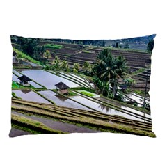 Rice Terrace Rice Fields Pillow Case