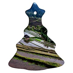 Rice Terrace Rice Fields Ornament (christmas Tree)  by Nexatart