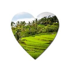 Rice Terrace Terraces Heart Magnet by Nexatart