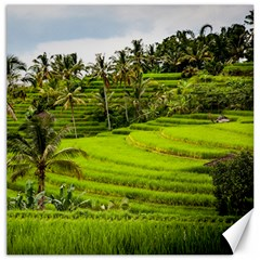 Rice Terrace Terraces Canvas 12  X 12   by Nexatart