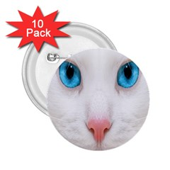 Beautiful White Face Cat Animals Blue Eye 2 25  Buttons (10 Pack)