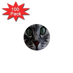 Cat Face Eyes Gray Fluffy Cute Animals 1  Mini Magnets (100 Pack)  by Mariart