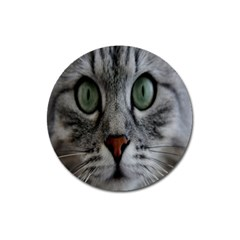 Cat Face Eyes Gray Fluffy Cute Animals Magnet 3  (round) by Mariart