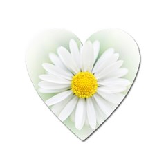 Art Daisy Flower Art Flower Deco Heart Magnet by Nexatart