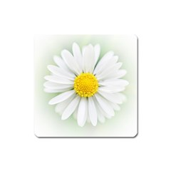 Art Daisy Flower Art Flower Deco Square Magnet