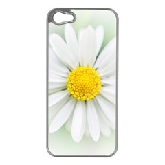 Art Daisy Flower Art Flower Deco Apple Iphone 5 Case (silver) by Nexatart