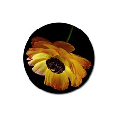 Ranunculus Yellow Orange Blossom Magnet 3  (round)