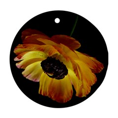 Ranunculus Yellow Orange Blossom Round Ornament (two Sides) by Nexatart