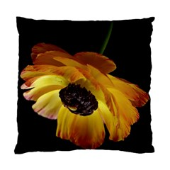 Ranunculus Yellow Orange Blossom Standard Cushion Case (two Sides) by Nexatart