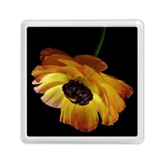 Ranunculus Yellow Orange Blossom Memory Card Reader (square)  by Nexatart