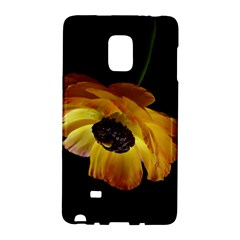 Ranunculus Yellow Orange Blossom Galaxy Note Edge by Nexatart