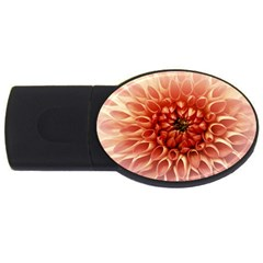 Dahlia Flower Joy Nature Luck Usb Flash Drive Oval (2 Gb) by Nexatart