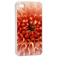 Dahlia Flower Joy Nature Luck Apple Iphone 4/4s Seamless Case (white)