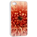 Dahlia Flower Joy Nature Luck Apple iPhone 4/4s Seamless Case (White) Front