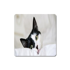 Cat Face Cute Black White Animals Square Magnet by Mariart