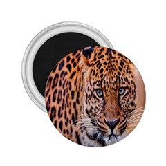 Tiger Beetle Lion Tiger Animals Leopard 2 25  Magnets by Mariart