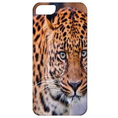 Tiger Beetle Lion Tiger Animals Leopard Apple Iphone 5 Classic Hardshell Case by Mariart