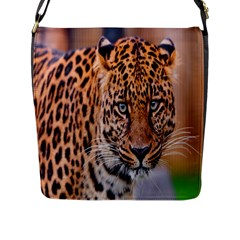 Tiger Beetle Lion Tiger Animals Leopard Flap Messenger Bag (l)