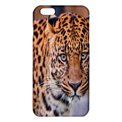Tiger Beetle Lion Tiger Animals Leopard Iphone 6 Plus/6s Plus Tpu Case by Mariart