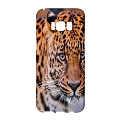 Tiger Beetle Lion Tiger Animals Leopard Samsung Galaxy S8 Hardshell Case  by Mariart