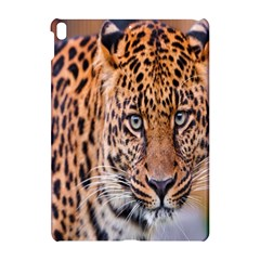 Tiger Beetle Lion Tiger Animals Leopard Apple Ipad Pro 10 5   Hardshell Case by Mariart