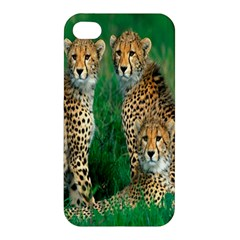 Animals Cheetah Apple Iphone 4/4s Premium Hardshell Case by Jojostore