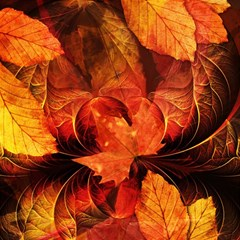 Ablaze With Beautiful Fractal Fall Colors Magic Photo Cubes by jayaprime