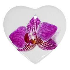 Lilac Phalaenopsis Aquarel  Watercolor Art Painting Ornament (heart) by picsaspassion