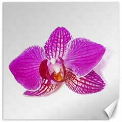 Lilac Phalaenopsis Flower, Floral Oil Painting Art Canvas 12  X 12   by picsaspassion