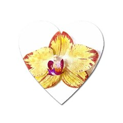 Yellow Phalaenopsis Flower, Floral Aquarel Watercolor Painting Art Heart Magnet by picsaspassion