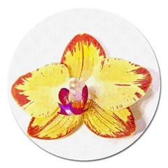 Phalaenopsis Yellow Flower, Floral Oil Painting Art Magnet 5  (round) by picsaspassion