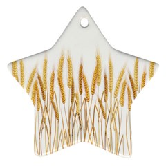 Wheat Plants Star Ornament (two Sides) by Mariart