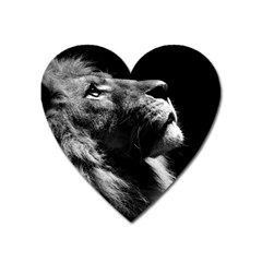Male Lion Face Heart Magnet by Celenk