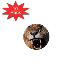 Male Lion Angry 1  Mini Magnet (10 Pack)  by Celenk
