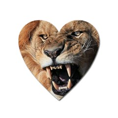 Male Lion Angry Heart Magnet by Celenk