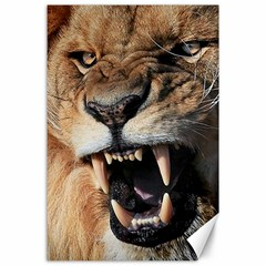 Male Lion Angry Canvas 24  X 36  by Celenk