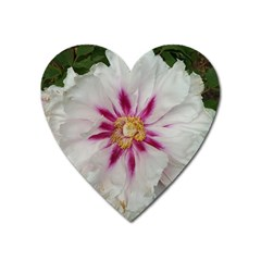 Floral Soft Pink Flower Photography Peony Rose Heart Magnet by yoursparklingshop