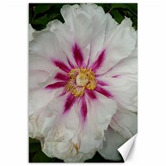 Floral Soft Pink Flower Photography Peony Rose Canvas 12  X 18   by yoursparklingshop